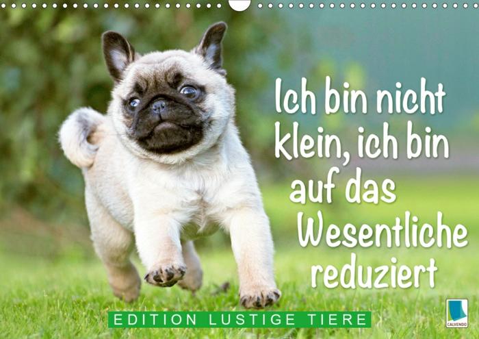 süßer laufender mops hund lustige bilder kostenlos humorvolle witze für gute stimmung
