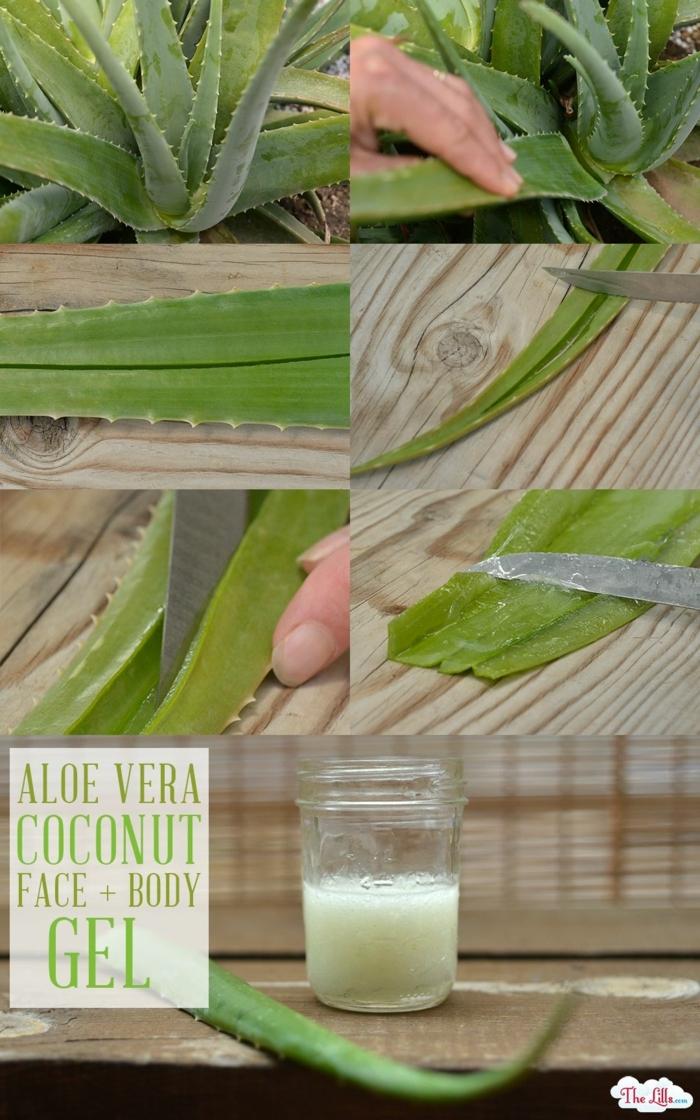 schritt für schritt anleitung diy aloe vera gel selber machen aloe vera pflanze schneiden