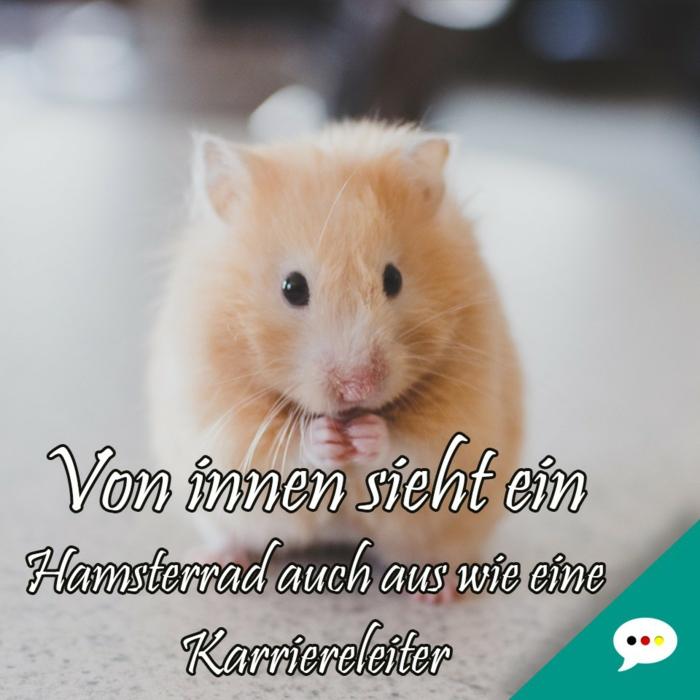 tiere süßes bild von einem kleinen hamster witzige bilder zum totlachen kostenlos von innen sieht ein hamsterrad auch aus wie eine karriereleiter