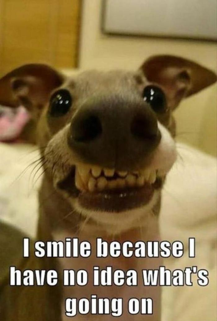 witziger lachender hund lustige sprüche bilder kostenlos bilder die zum lachen bringen