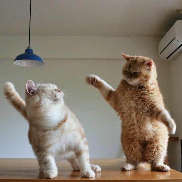 zwei katzen auf einem tisch witzige bilder zum totlachen kostenlos blaue lampe humorvolle bilder bessere stimmung