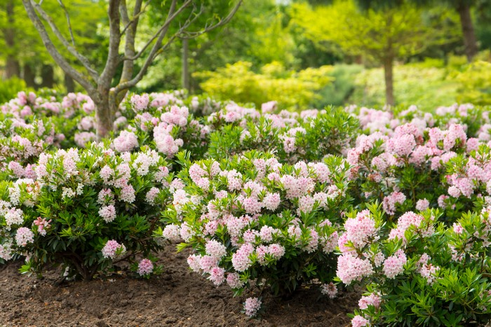 bloombux den garten anlegen geeignete blumen pflanzen wählen hecke blumen