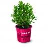 bloombux nugget magenta topf den garten anlegen pflanzen auswählen rosa topf bloombux de