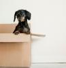 kleiner hund in einem umzugskarton günstige umzugskartons kaufen welche arten von kartons gibt es