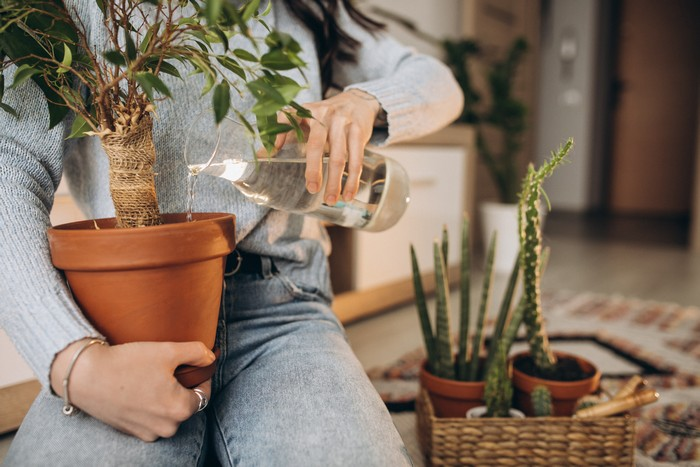 young woman cultivating plants at home