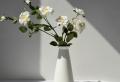Wohnaccessoires, mit denen Sie Ihren Wohnraum verschönern können
