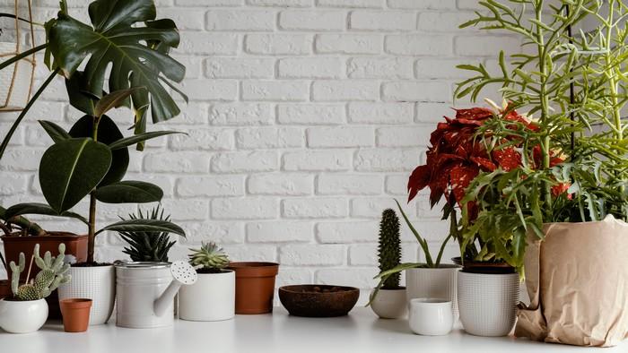 nachhaltig wohnen umweltfreundliche wohnung einrichten nachhaltige wohntrends grüne pflanzen im wohnraum blumentöpfe rattanmöbel