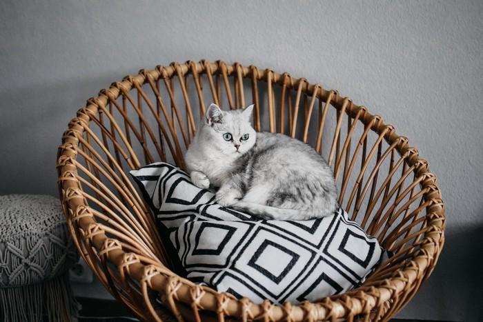 nachhaltige möbel wohntrends umweltfreundlich wohnen ratanstuhl dekokisse in schwarz weiß katze sitzt