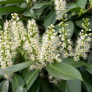 Heckenpflanzen verschönern den eigenen Garten und sorgen für guten Sichtschutz