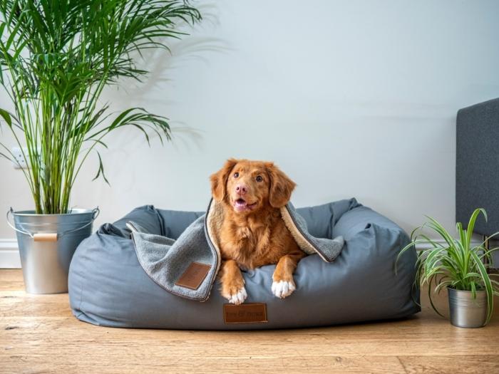 blaues gemütliches bett für hunde hundebette kaufen informationen