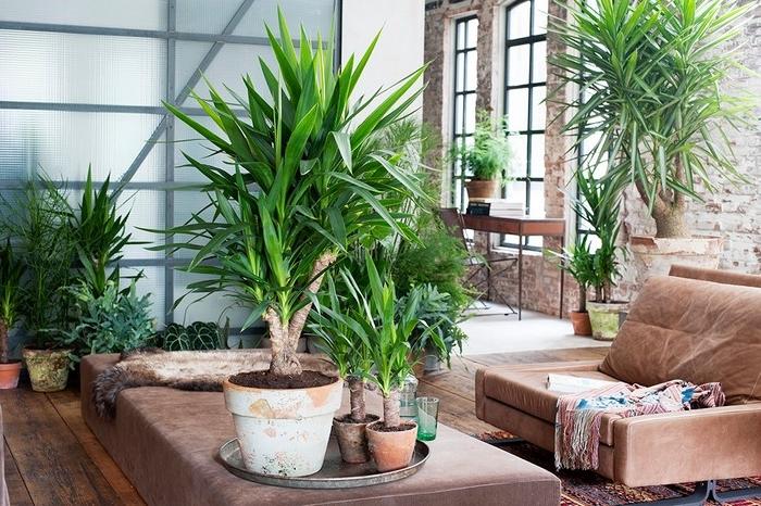 haus mit zimmerplanzen füllen geeignete pflanzen wählen plantsome de