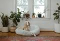 Hundebetten für Ihren besten Freund kaufen