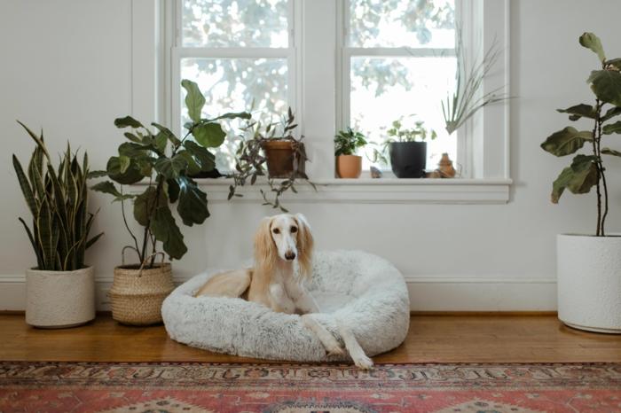 hundebetten mit memory effekt kaufen wichtige informationen