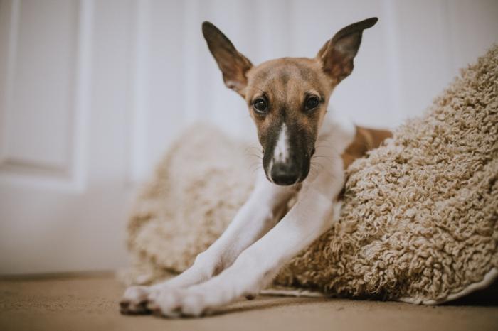 hundekissen mit memory effekt das beste hundebett kaufen