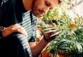 Zimmerpflanzen bereichern jedes Wohnambiente