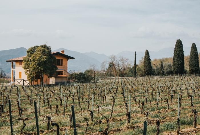 toscana weinstraßen das beste wein reise durch italien