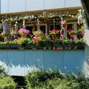 Tipps zur Auswahl der richtigen Blumenkästen