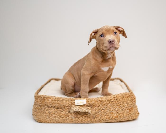 wie wähle ich das beste hundebett informationen und tipps