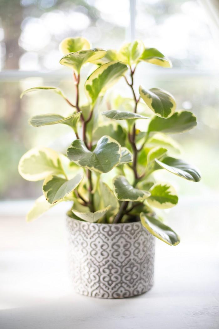 zimmerpflanzen im haus wählen grüne pflanzen wählen sich kümmern weiß grauer blumentopf frische pflanze platsome de