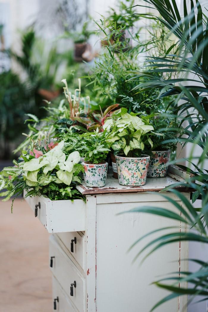 zimmerpflanzen ordnen grüne pflanzen im haus wachsen weißer schrank mit pglanzen bunten töpfen plantsome de