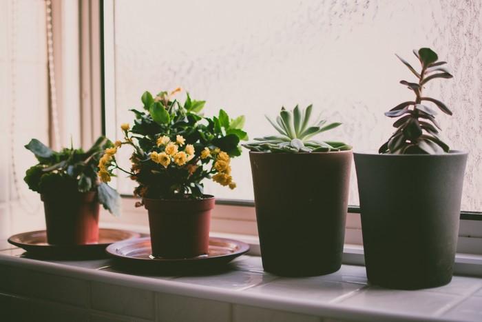 zimmerpflanzen wählen frische luft kleine pflanzen vier blumentöpfe minipflanzen am fensterrand plantsome de