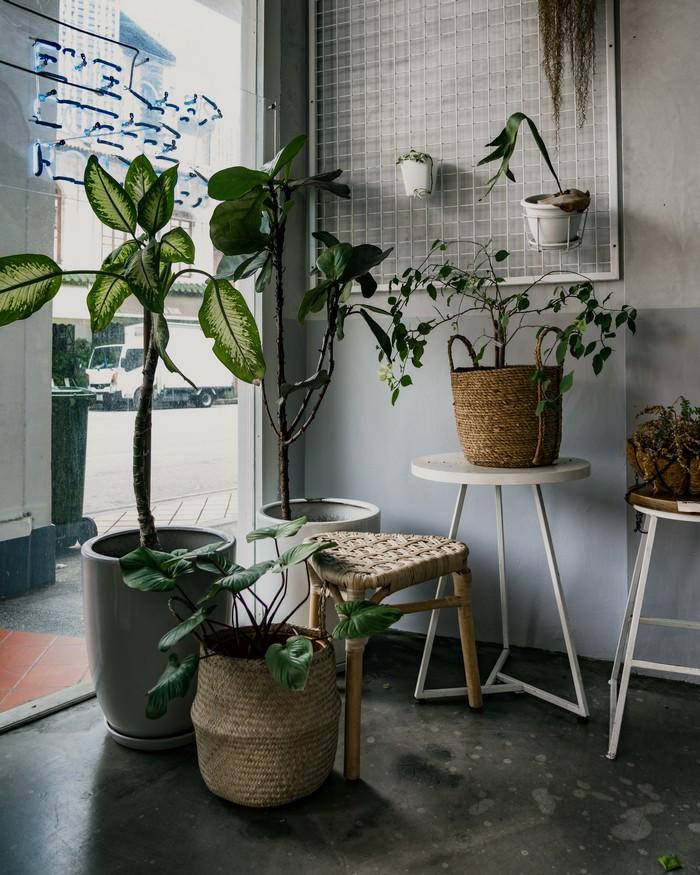 akustik absorber raumakustik verbessern nachhallzeit natürliche schallabsorption grüne zimmerpflanzen