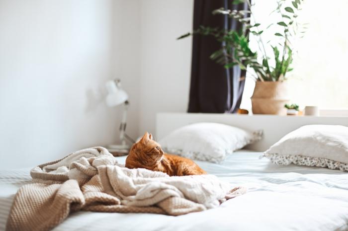bett kaufen wichtige informationen und tipps boxspringbett online süße katze auf dem bett