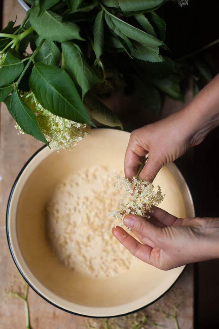 holunderblütensirup ohne zucker selber machenschritt für schrtitt zwei hände