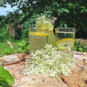 ein garten mi grünen bäumen und gras holunderblütensirup rezept gläser mit gelbem holunderblütensirup und geschnittenen zitronen