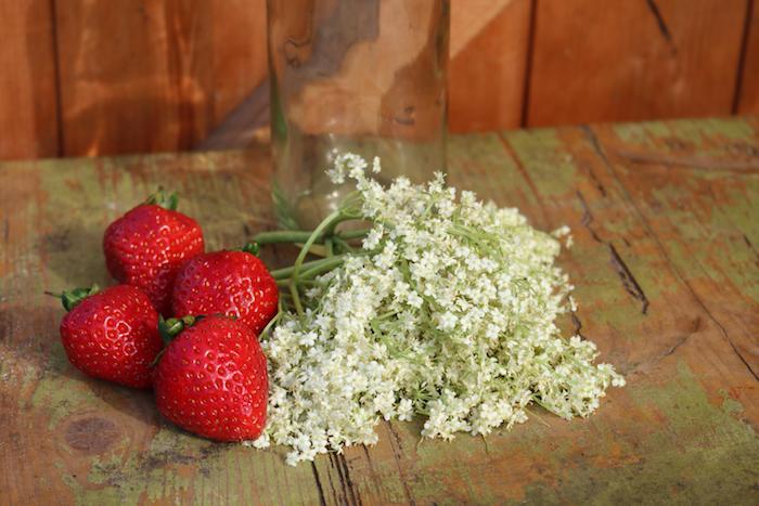 frische rote erdbeeren holunderblütensirup ohne zucker selber machen holunderblütensirup mit erdbeeren