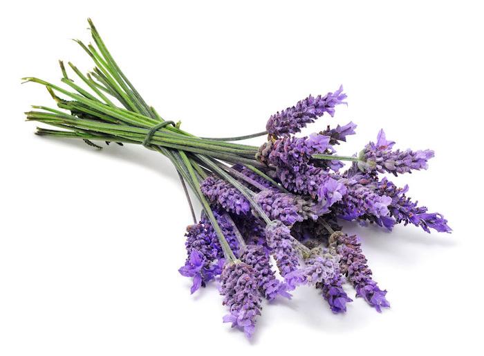 10 lavender blume pflanzen die viel sonne vertragen und wenig wasser brauchen lila bluemen