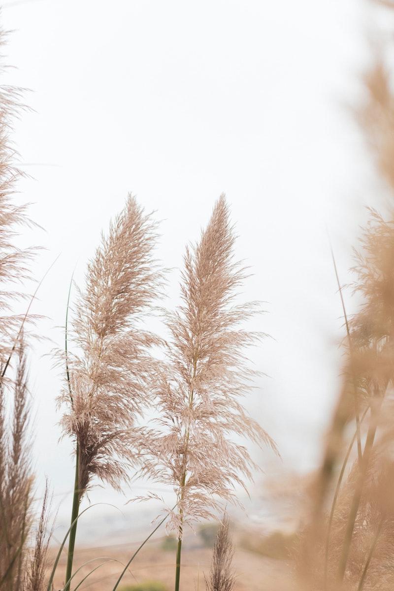 10 schöne pampasgras bilder tipps zur pflege