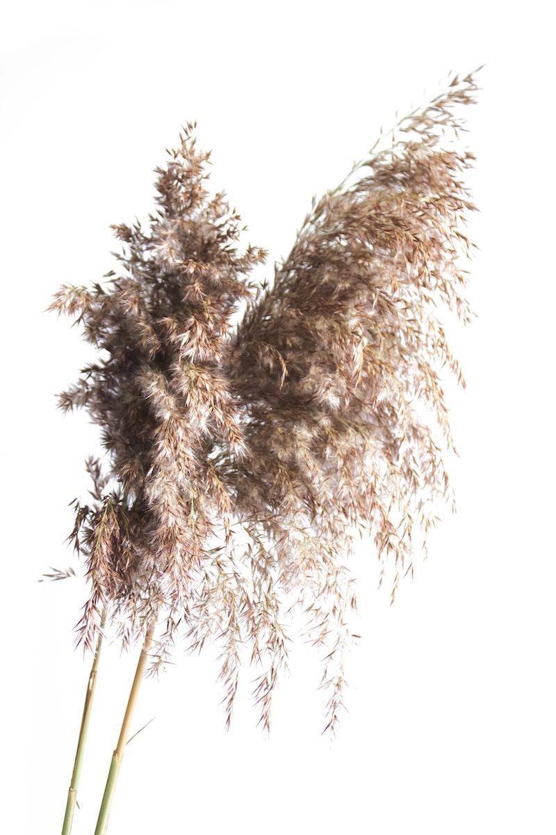 5 bild von pflanze pampasgras schneiden tipps und infos