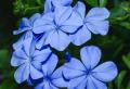 Pflanzen, die wenig Wasser brauchen – Endlich werden Sie lebende Blumen haben