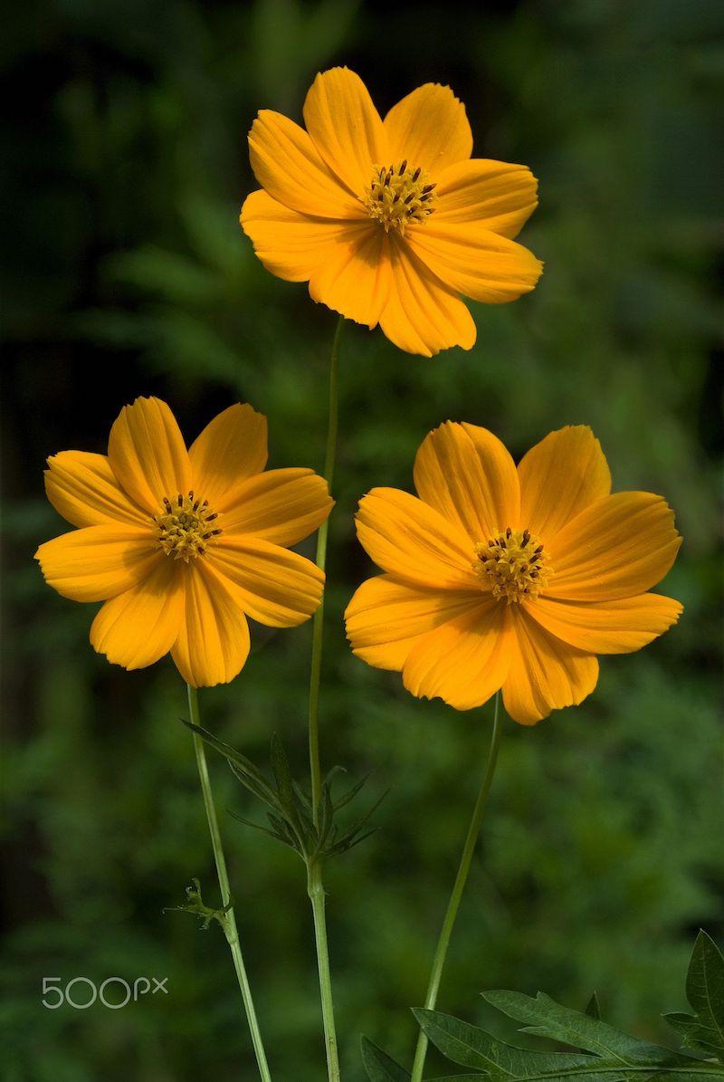schmuckkörbchen hübsche gelbe blumen sommerblumen balkon wichtige informationen
