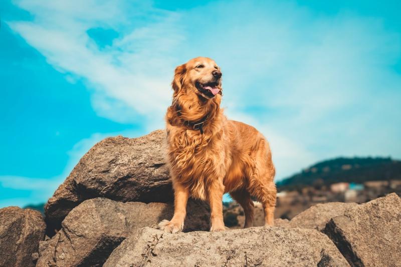 aktive hunderassen welcher hund passt zu mir golden retriever