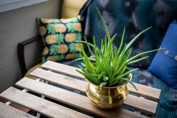 aloe vera pflanze ein tisch aus holz kissen aloe vera gel selber machen