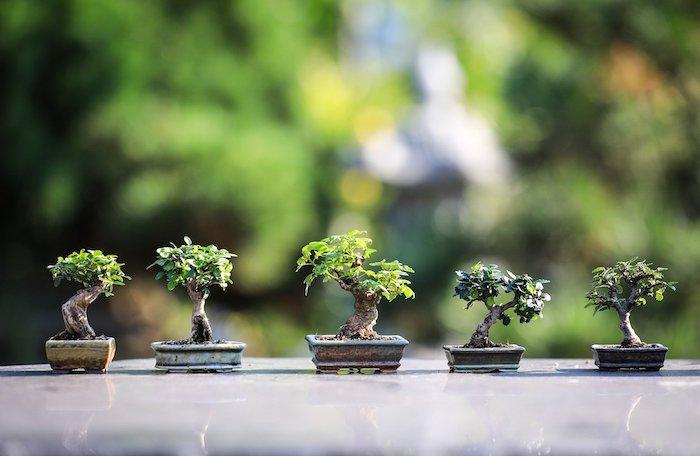 bonsai gießen ideen kleine bonsai bäume bonsai pflege tipps kleine bäume mit grünen blättern