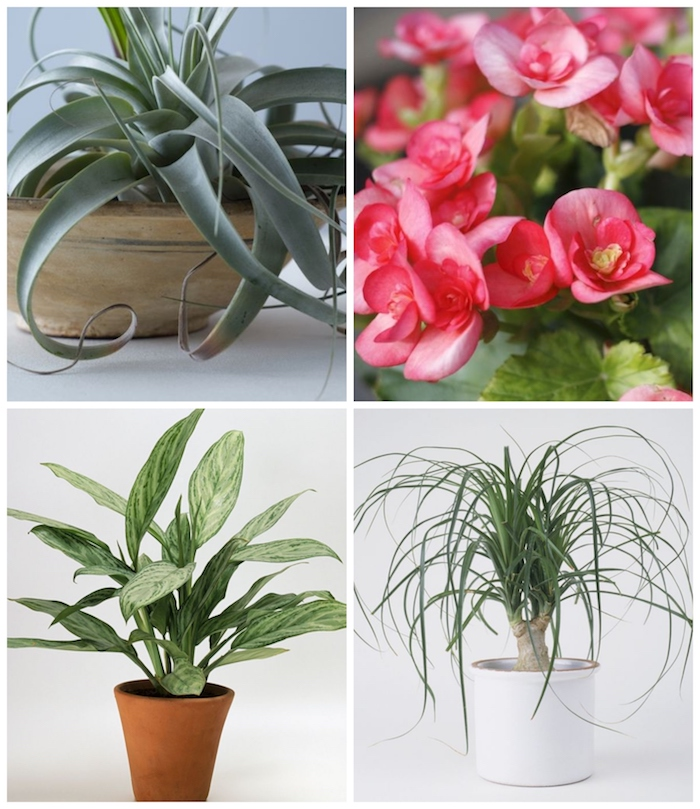 collage von pflanzen die wenig wasser brauchen verschiedene arte pinke blumen information