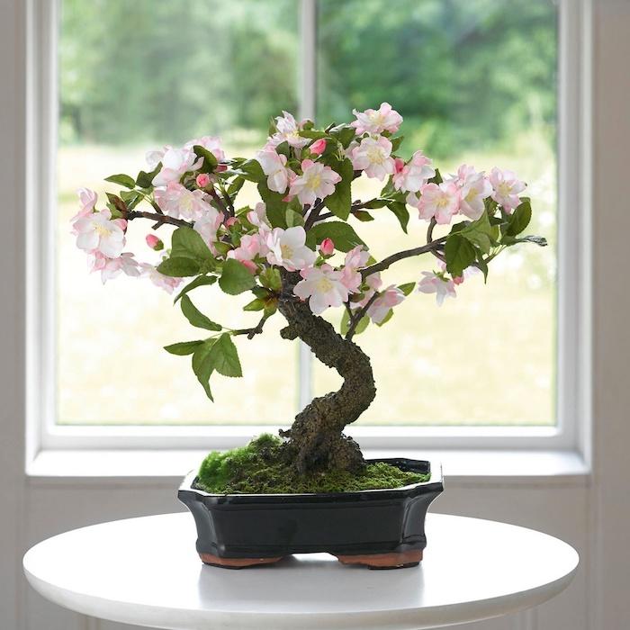 ein fenster bonsai pflege tipps ein schwarzer topf mit einem bonsai baum mit grünen bäumen und weißen blüten