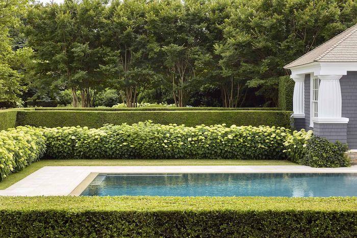 ein pool im garten buchsbaum schneiden gartengestaltung ideen fürnen pflanzen