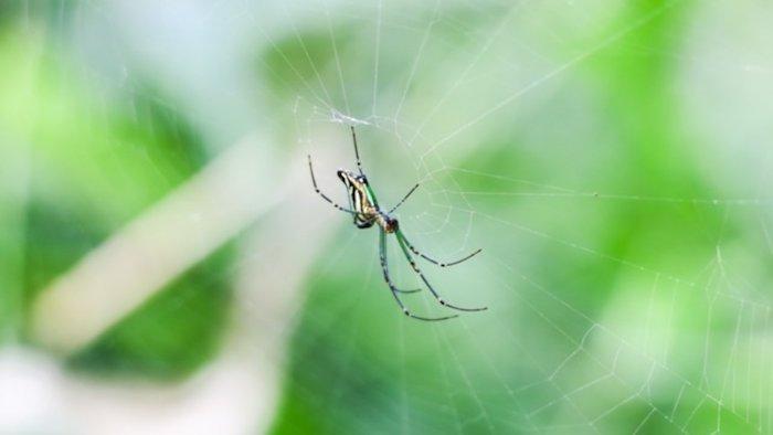 foto von einer spinne im spinnennetz natürliche mittel gegen spinnen selber machen