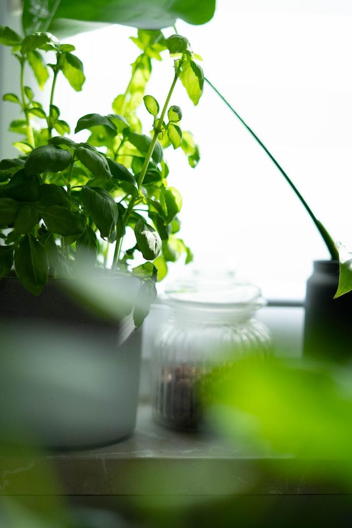 garten gestalten ideen basilikum pflege tipps zuhause düngen frische grüne pflanze im topf