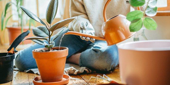 gibt es pflanzen die wenig wasser brauchen hellbrauner topf trockenresistente pflanzen