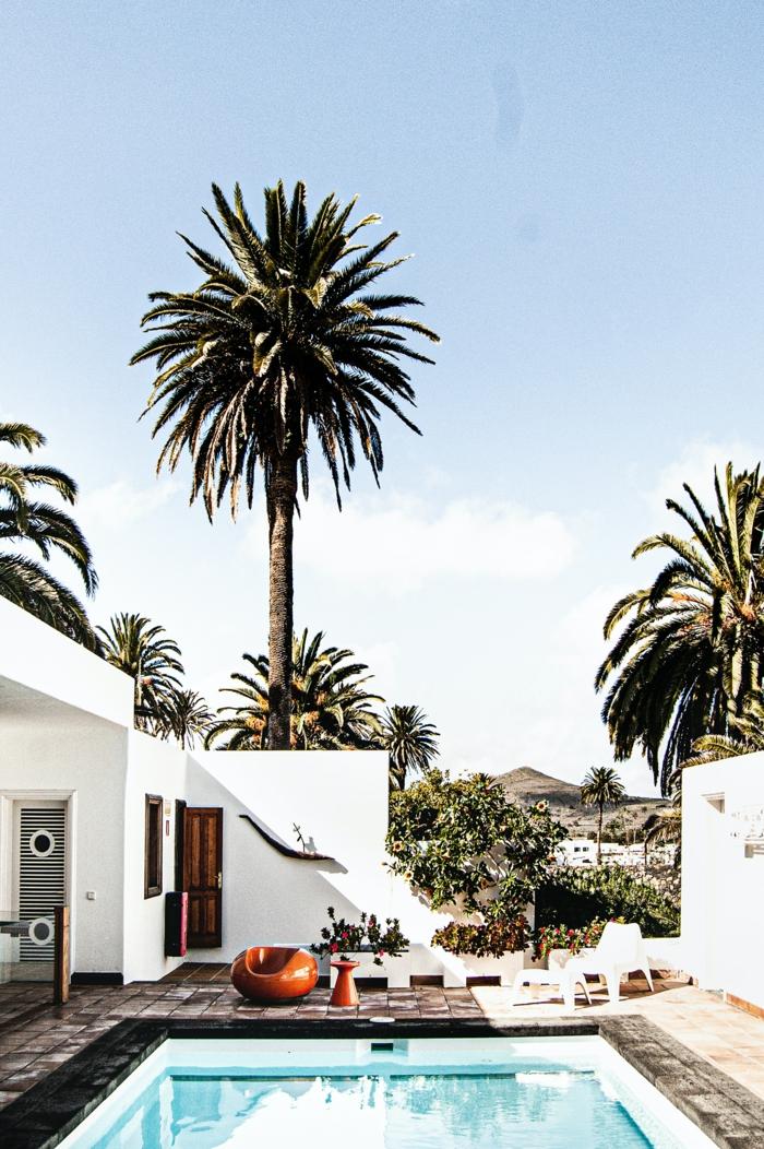 große palmen bäume kleiner schwimmbad pool für kleinen garten luxuriöse außeneinrichtung isnpiration