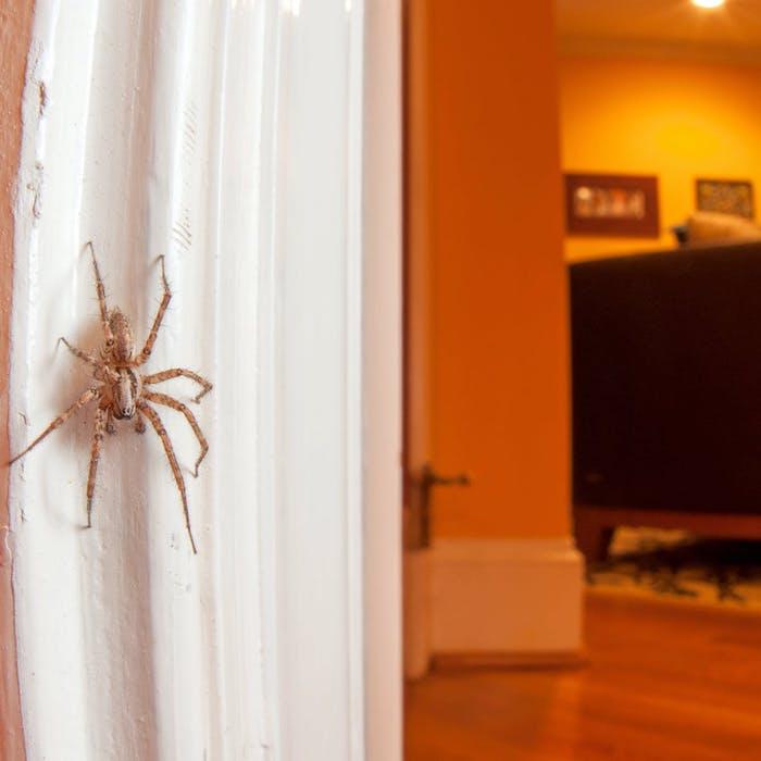 große spinne an die tür was tun gegen spinnen nützliche tipps und diy mittel