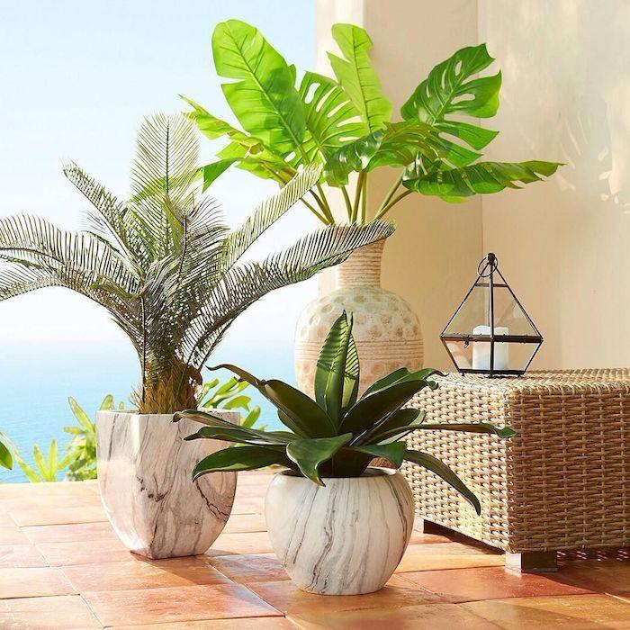 große und kleine grüne pflanzen die viel sonne vertragen und wenig wasser brauchen