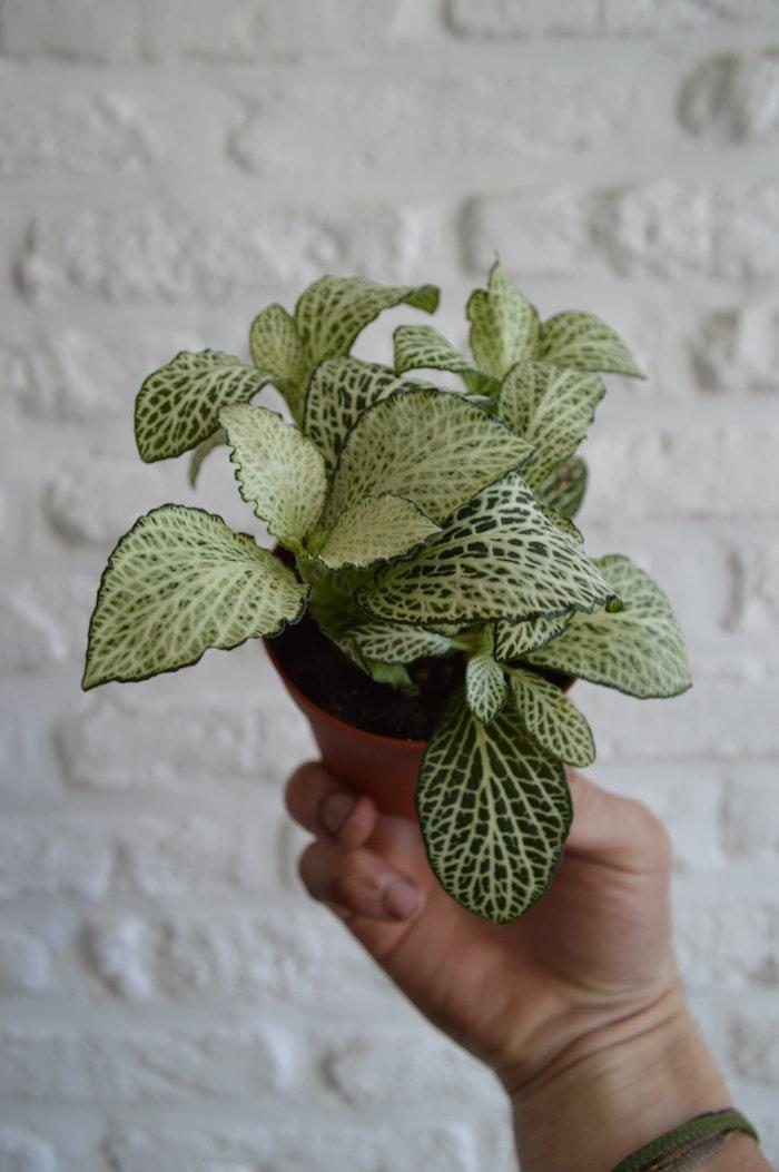 grüne pflanze in einem kleinen braunen topf winterharte pflanzen für pralle sonne weiße backsteinwand
