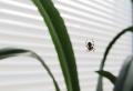 Spinnen vertreiben und wieso Sie sie nicht töten sollten
