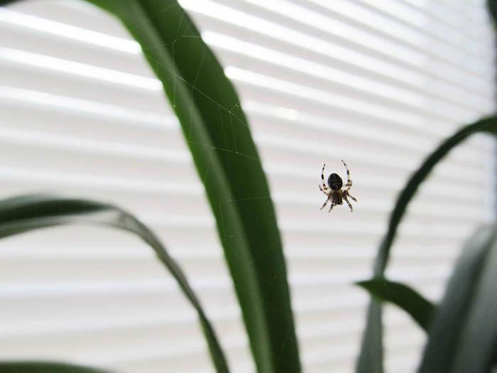 grüne-pflanze-kleine-spinne-am-fenster-spinnen-in-der-wohnung-vertreiben-hilfreiche-tipps-und-mittel